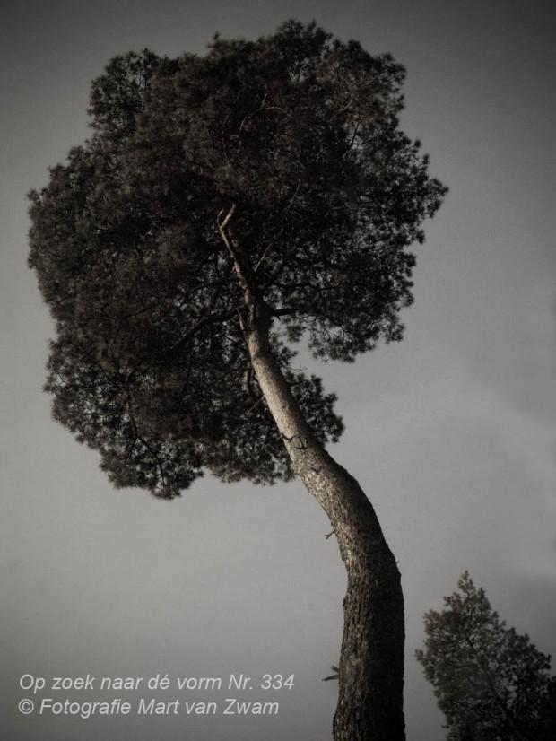 Bomen, natuur
